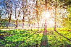Dziki ekologia parka krajobraz obrazy royalty free