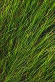 Dziki grass2 Fotografia Royalty Free