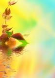 dziki gronowy liść Obrazy Royalty Free