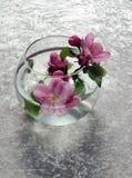 dziki jabłczany kwiat obraz stock
