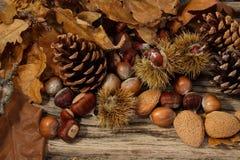 Dziki jesieni tło Obraz Stock