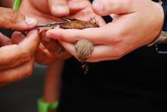 Dziki Kanarowy Ptak zdjęcia stock