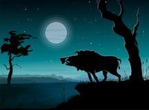 Dziki knur, noc krajobraz Zdjęcia Royalty Free