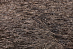 Dziki knur & x28; Sus scrofa& x29; tileable skóry bezszwowa tekstura Obraz Royalty Free
