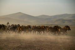 Dziki koń gromadzi się bieg w pustyni, kayseri, indyk fotografia stock