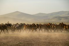 Dziki koń gromadzi się bieg w pustyni, kayseri, indyk obraz royalty free