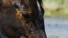 Dziki koń, Malujący mustang zamknięty w górę pięknego niebieskiego oka Dayton, Nevada obraz royalty free