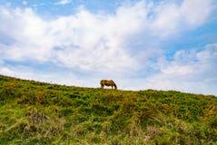 Dziki koń w halnym krajobrazie obraz royalty free