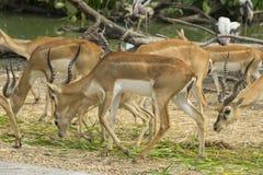 Dziki kochany w zoo, Tajlandia zdjęcia royalty free