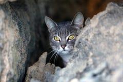 dziki kot Zdjęcia Stock