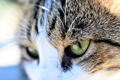 Dziki kot w górę zdjęcia stock