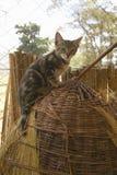 Dziki kot w zwierzęcej łatwości Nairobia, Kenja, Afryka przy KWS Kenja przyrody usługa Zdjęcia Royalty Free