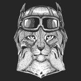 Dziki kota rysia rysia rudy bryk jest ubranym lotnika kapelusz Druk dla dzieci odziewa, trójnik, koszulka Pilotowy dzikie zwierzę obraz stock