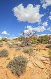 Dziki krajobraz w Canyonlands parku narodowym Obrazy Stock