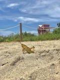 Dziki krykiet, słoneczny dzień fotografia stock