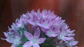 2 dziki kwiat Zdjęcie Stock