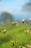 dziki kwiat Obraz Royalty Free