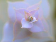 Dziki kwiat 02 Zdjęcia Stock