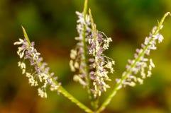 dziki kwiat Zdjęcie Stock