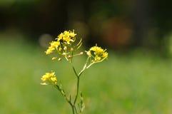 dziki kwiat Zdjęcia Royalty Free