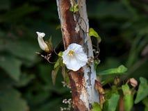 Dziki kwiat i rdza Fotografia Stock
