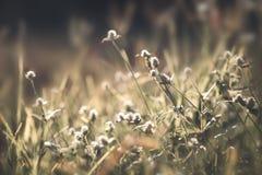 dziki kwiat pola Fotografia Stock