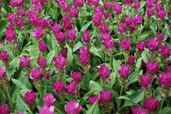 dziki kwiat pola Obraz Stock