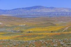 Dziki kwiat przy antylopy doliną zdjęcie royalty free
