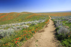 Dziki kwiat przy antylopy doliną zdjęcia royalty free