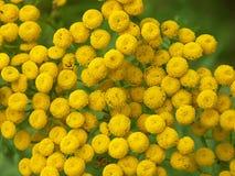 dziki kwiat tło Zdjęcia Royalty Free
