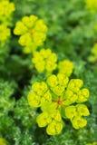 Dziki kwiat w kwiacie Zdjęcia Royalty Free