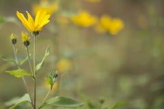 Dziki kwiat W ogródzie Zdjęcie Royalty Free