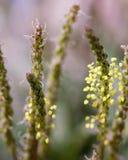 Dziki kwiat z blured tłem zdjęcie royalty free