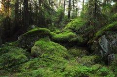 Dziki las Obrazy Royalty Free