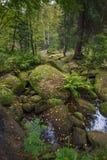 Dziki las Zdjęcia Stock