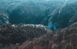 Dziki las Suncuiux w Rumania zdjęcie royalty free