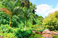 Dziki lasowy kraj Sri Lanka Zdjęcia Royalty Free