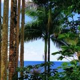 Dziki lasowy kraj Sri Lanka Fotografia Royalty Free
