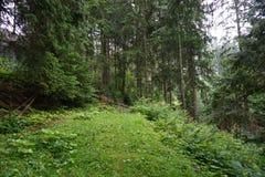 Dziki lasu krajobraz, łamający drzewo na sposobie obraz stock
