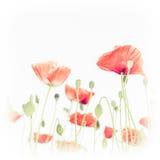Dziki maczek kwitnie na lato łące szczegółowy rysunek kwiecisty pochodzenie wektora Zdjęcia Royalty Free
