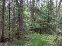 Dziki mieszany stojak w lecie Zdjęcia Royalty Free