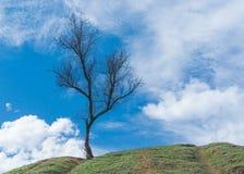 Dziki morelowy drzewo na wzgórzu w wczesnym wiosna sezonie Obrazy Stock