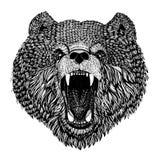 Dziki niedźwiadkowy Wektorowy wizerunek dla tatuażu, koszulka, plakaty Wręcza patroszoną ilustrację Zdjęcie Stock