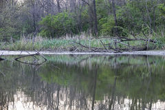 Dziki nieporuszony jeziorny brzeg w wieczór w wiośnie Zdjęcia Stock
