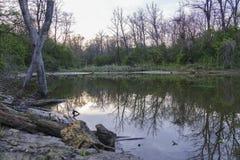 Dziki nieporuszony jeziorny brzeg w wieczór w wiośnie Obraz Royalty Free