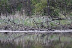 Dziki nieporuszony jeziorny brzeg w wieczór w wiośnie Obraz Stock