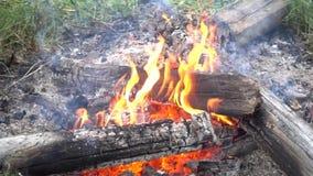 dziki ogień zbiory
