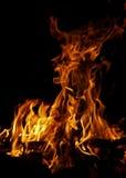 dziki ogień Obraz Royalty Free