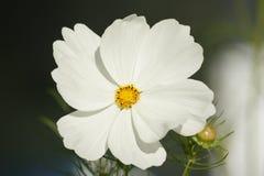 dziki piękny kwiat Fotografia Royalty Free