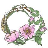 Dziki pies wzrastał kwiat ramy konturu atramentu kolorystyki dorosłej strony rysunkowego wektorowego clipart na białym tle Obraz Stock